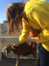 Petting another goat who tried to eat Casey's pumpkin
